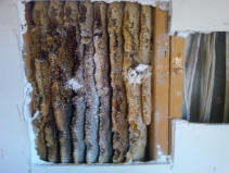 Black Canyon City - Honey comb in a wall that took about 3-6 months to build